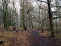 A footpath in Jobson Wood - geograph.org.uk - 655065.jpg