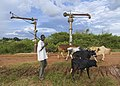 A man herds his cattle along the train tracks of the old railway in Lira, Uganda.jpg