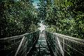 A ponte do caminho do mar.jpg
