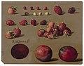 Aardbeien en pruimen, RP-T-1886-A-599.jpg
