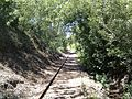 Abandoned Railroad covered in trees - panoramio.jpg