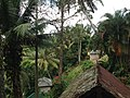 Abiansemal, Badung Regency, Bali, Indonesia - panoramio (1).jpg