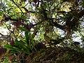 Abundante diversidad vegetal en la fila del Ávila.jpg