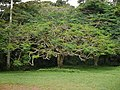 Aburi garden 6.jpg