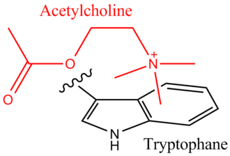 Cation–pi interaction - Cationic Acetylcholine binding to a tryptophan residue of the nicotinamide acetylcholine receptor via a cation–π effect.