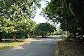 Acharya Jagadish Chandra Bose Indian Botanic Garden - Howrah 2011-01-08 9819.JPG
