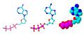Adenosinetrifosfaat.PNG