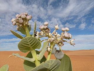 Adrar Region region of Mauritania