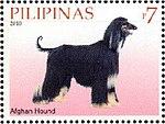 Afghan-Hound-Canis-lupus-familiaris.jpg