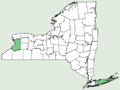 Agropyron cristatum NY-dist-map.png