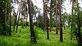 Aleksin, Tula Oblast, Russia - panoramio (104).jpg