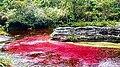 Alfombra roja natural.jpg
