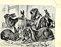 All about animals. Facts, stories and anecdotes (1900) (14777822632).jpg