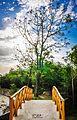 Alone tree in hope.jpg