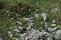 Alpine marmot - Marmota marmota - panoramio (3).jpg