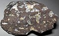 Amygdaloidal basalt (Portage Lake Volcanic Series, upper Mesoproterozoic, 1.093 to 1.097 Ga; Keweenaw Peninsula, Upper Peninsula of Michigan, USA) 26.jpg