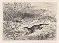 An Otter MET DP874280.jpg