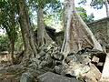 Angkor - Ta Prohm - 013 Trees and Stones (8580841305).jpg