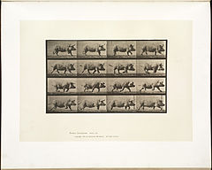 Animal locomotion. Plate 675 (Boston Public Library).jpg