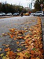 Ankara'da Aralık'ta Sonbahar - panoramio.jpg