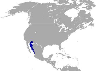 Antelope jackrabbit - Image: Antelope Jackrabbit area