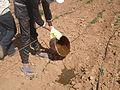 Application produits ecosan (digestat) à Dayet Ifrah, Maroc (12084890944).jpg