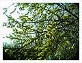 April Parc Natural Mundenhof Freiburg expropiated Baron Manors - Master Wildlife ^ Zoo Photography 2013 - panoramio (21).jpg