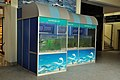 Aquarium Life - Bardhaman Science Centre - Bardhaman 2015-07-24 1305.JPG
