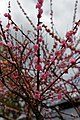 Arashiyama 3-25 (26463391836).jpg