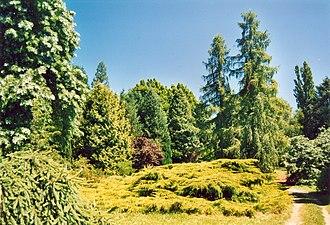 Arboretum national des Barres - Arboretum national des Barres