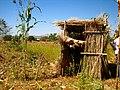 Arborloo in Ethiopia (5570896440).jpg
