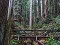 Arcata Community Forest - panoramio.jpg