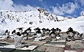Army Jawans performing Yoga, on the occasion of the 3rd International Day of Yoga – 2017, at Siachen on June 21, 2017 (1).jpg