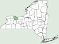 Artemisia dracunculus NY-dist-map.png
