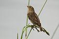 Austin Roberts Bird Sanctuary-064.jpg