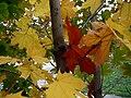 Autumn E5.jpg