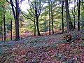 Autumn in the Wyre Forest - geograph.org.uk - 1027305.jpg