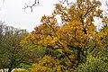 Autumn tree in Parc des Buttes-Chaumont, November 2019 3.jpg