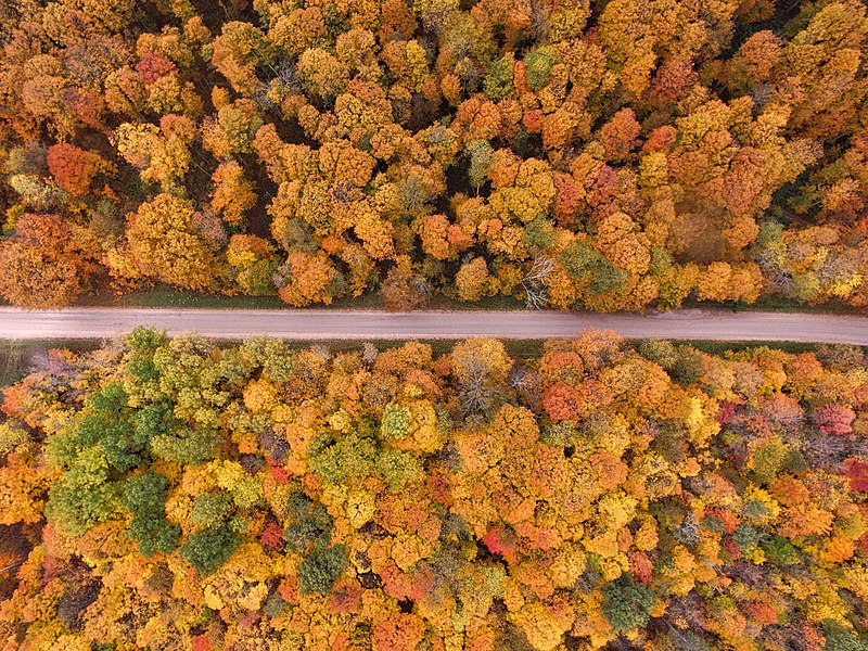 File:Autumn trees near asphalt road (Unsplash).jpg