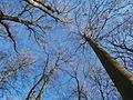 Bäume unter Blauem Himmel im Januar 2016 in Deutschland (3).JPG