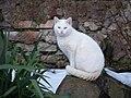 Bílá kočka, Mutějovice.jpg