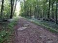 Balade en Forêt de Verrières le 20 août 2017 - 029.jpg