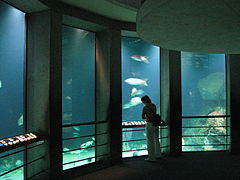 Baltimore Aquarium - Big tank.jpg