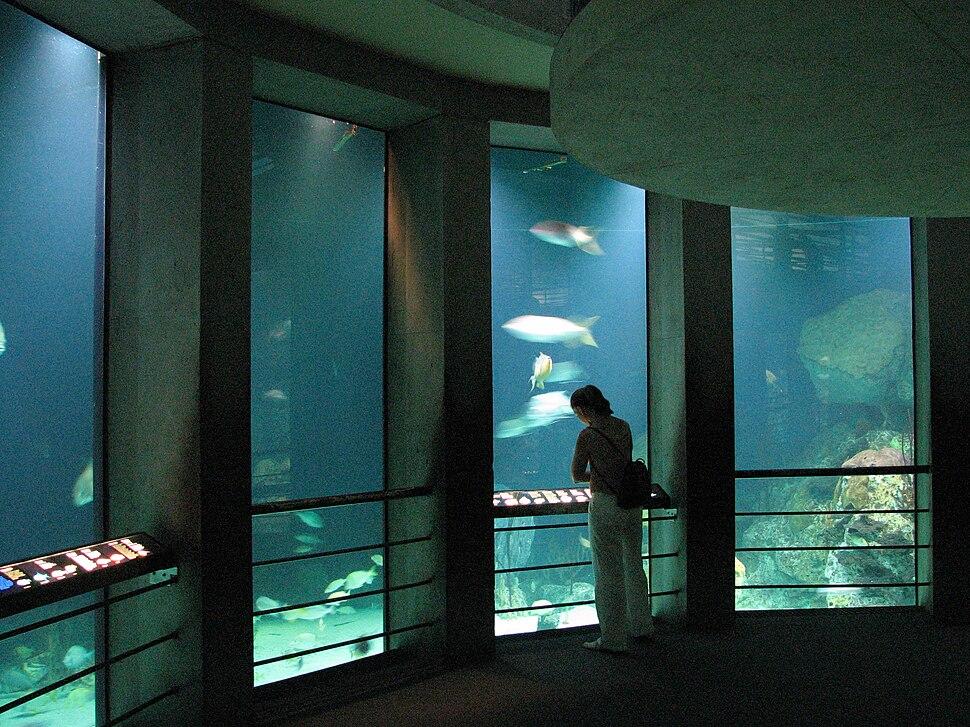 Baltimore Aquarium - Big tank