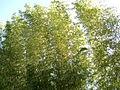 Bamboo-blossom-genay-france.jpg