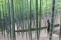 Bamboo grove kyoto.jpg