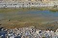 Bassa al riu Gorgos per Ramblars (Xàbia).JPG