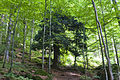 Bayerischer Wald - Mittelsteighütte 001.jpg