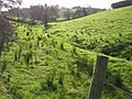 Beagh Townland - geograph.org.uk - 592126.jpg