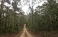 Benandarah NSW 2536, Australia - panoramio (51).jpg